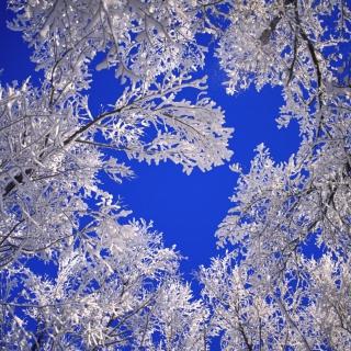 Frosted Trees In Colorado - Obrázkek zdarma pro 1024x1024