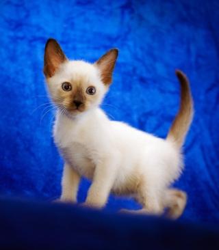 Cute Siamese Kitten - Obrázkek zdarma pro Nokia C1-01