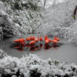 Flamingo on Lake - Obrázkek zdarma pro iPad mini 2