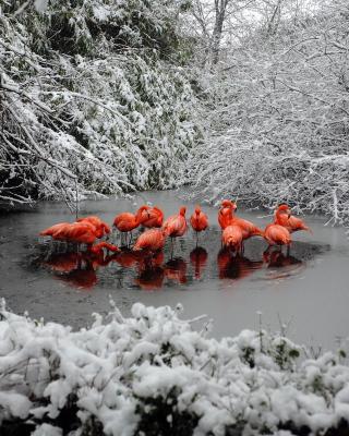 Flamingo on Lake - Obrázkek zdarma pro Nokia 206 Asha