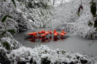 Flamingo on Lake - Obrázkek zdarma pro Fullscreen Desktop 1280x960