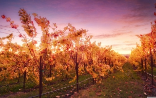 Sunset In Russian River Valley Picture for Android, iPhone and iPad