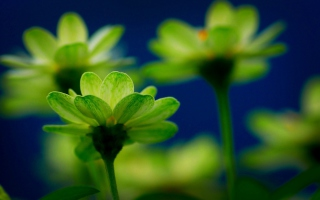 Green Flowers Background for Android, iPhone and iPad