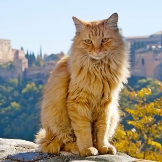 Cat in Granada, Andalusia - Obrázkek zdarma pro iPad mini 2