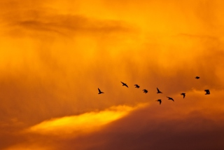 Orange Sky And Birds Background for Android, iPhone and iPad