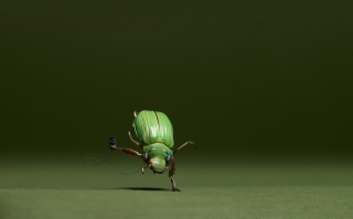 Green Bug Wallpaper for Android, iPhone and iPad