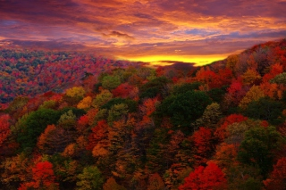 Autumn Forest At Sunset Wallpaper for Android, iPhone and iPad