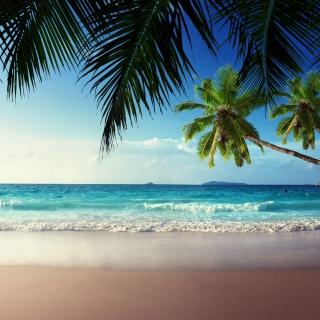 Sunshine in Tropics - Obrázkek zdarma pro 320x320