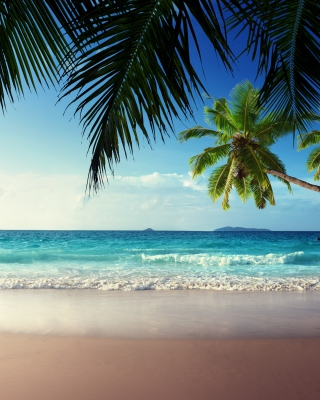 Sunshine in Tropics - Obrázkek zdarma pro Nokia Asha 503