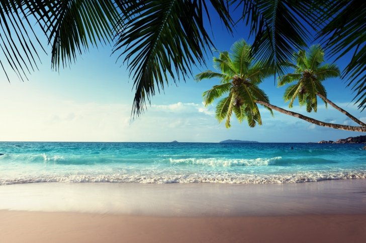 Sunshine in Tropics wallpaper