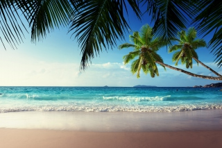 Sunshine in Tropics Wallpaper for Android, iPhone and iPad