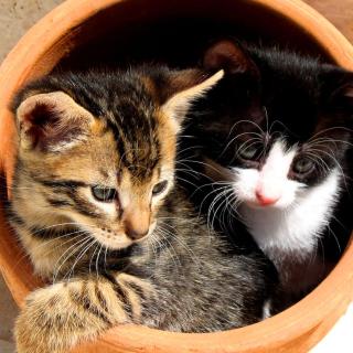 Two Cat Friends - Obrázkek zdarma pro iPad 2