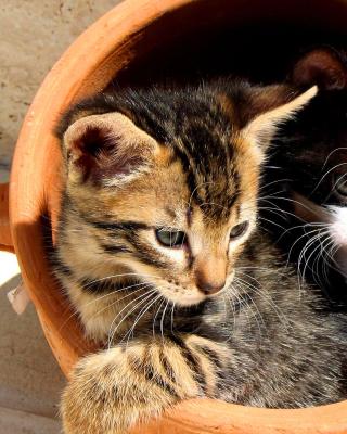 Two Cat Friends - Obrázkek zdarma pro 360x480
