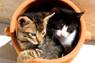 Two Cat Friends - Obrázkek zdarma pro Nokia C3
