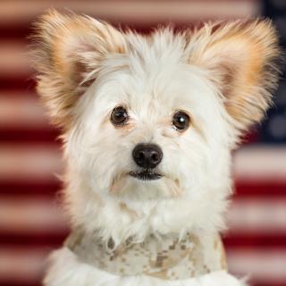 My Best Friend Dog - Obrázkek zdarma pro iPad Air