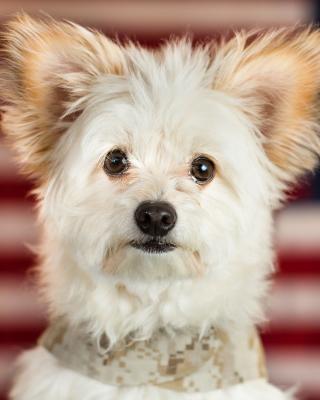 My Best Friend Dog - Obrázkek zdarma pro iPhone 4S