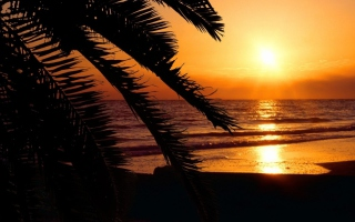 Tropical Paradise Beach Background for Android, iPhone and iPad
