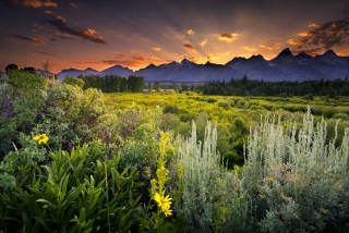 Wyoming National Park In Usa Background for Android, iPhone and iPad