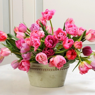 Bouquet of Tulips - Obrázkek zdarma pro 1024x1024
