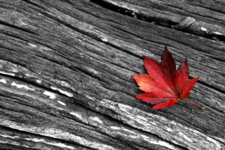 Little Red Leaf Wallpaper for Android, iPhone and iPad