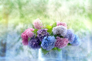 Hydrangeas Picture for Android, iPhone and iPad