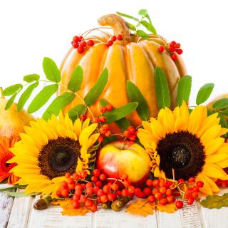 Harvest Pumpkin and Sunflowers - Obrázkek zdarma pro 128x128