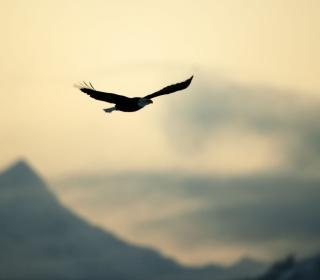Eagle In The Sky - Obrázkek zdarma pro iPad Air