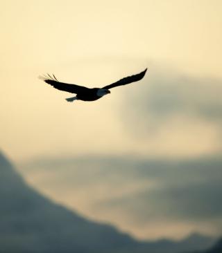 Eagle In The Sky - Obrázkek zdarma pro Nokia C1-02