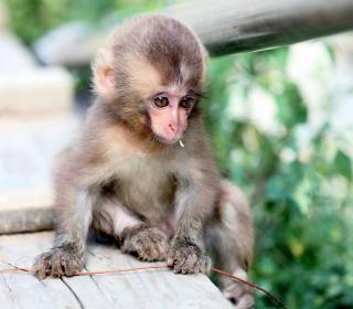 Baby Monkey - Obrázkek zdarma pro 208x208