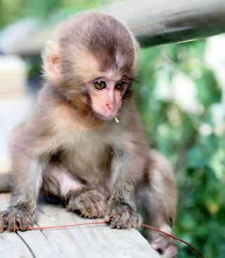Baby Monkey - Obrázkek zdarma pro iPhone 5S