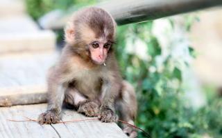 Baby Monkey - Obrázkek zdarma pro Android 640x480