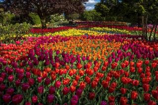 Spring Tulips Garden - Obrázkek zdarma pro HTC Wildfire