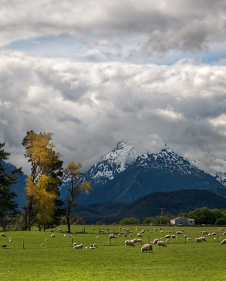 Sheeps On Green Field And Mountain View - Obrázkek zdarma pro 320x480
