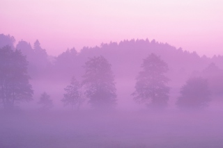 Pink Mist Wallpaper for Android, iPhone and iPad