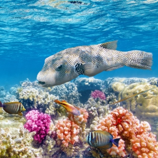 Reef World - Obrázkek zdarma pro 1024x1024