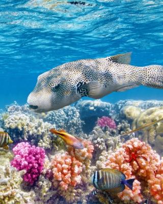 Reef World - Obrázkek zdarma pro 1080x1920