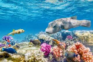 Free Reef World Picture for Android, iPhone and iPad