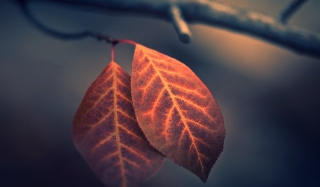Two Ember Leaves Picture for Android, iPhone and iPad