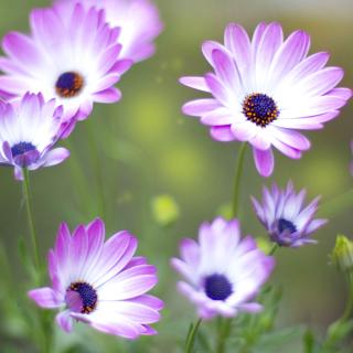 Summer Flowers - Obrázkek zdarma pro iPad