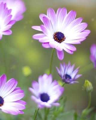 Summer Flowers - Obrázkek zdarma pro Nokia Asha 305