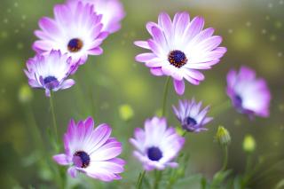 Summer Flowers - Obrázkek zdarma pro 720x320