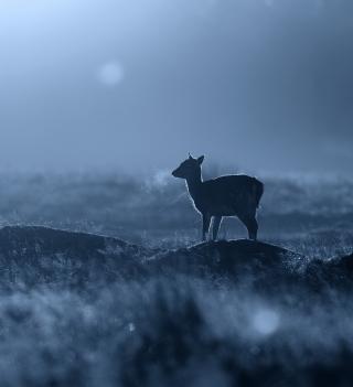 Baby Deer - Obrázkek zdarma pro iPad 3