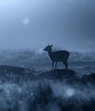 Baby Deer - Obrázkek zdarma pro 640x960