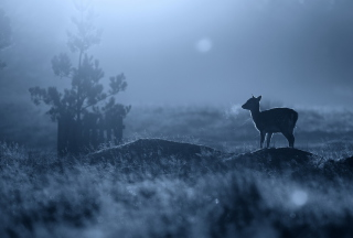 Baby Deer - Obrázkek zdarma pro 800x480