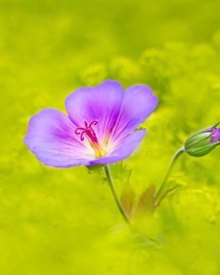 Single wildflower - Obrázkek zdarma pro Nokia Asha 309