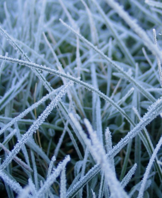 First Frost - Obrázkek zdarma pro 480x854