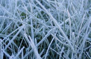 First Frost - Obrázkek zdarma pro Sony Xperia Z
