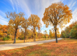 Autumn Path Wallpaper for Android, iPhone and iPad