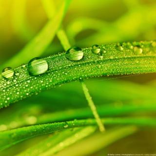 Dew on Grass - Obrázkek zdarma pro 128x128
