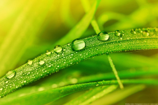 Dew on Grass - Obrázkek zdarma pro Widescreen Desktop PC 1440x900
